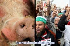 HELL YEAH! Muslims INVADING Texas Are In For A HUGE Surprise… They Aren't Messing Around