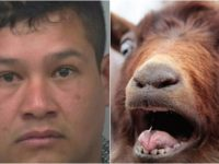 BREAKING News Out Of Georgia… Look What This Mexican Did To His Goat!