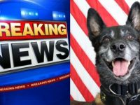 BREAKING NEWS: Shootout Between Cops And Gunman In THIS State- K9 Officer Shot Multiple Times- Shooter Is…